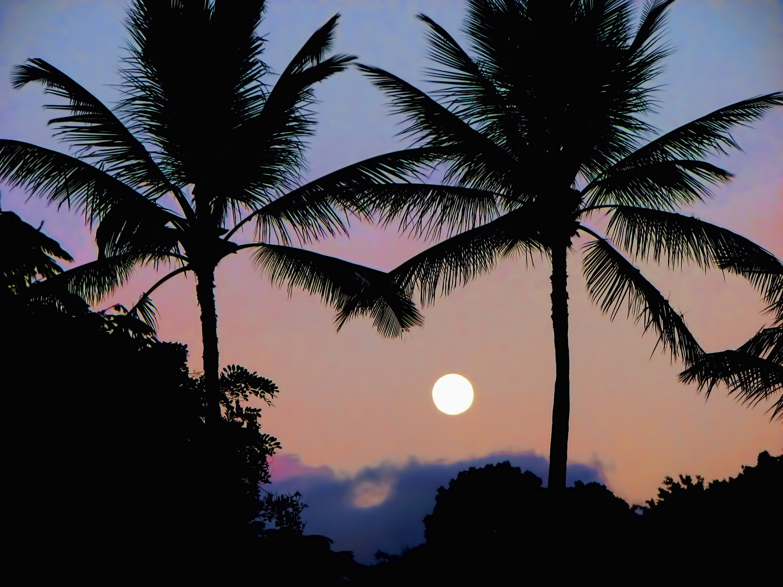 tropical_moon_blog