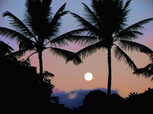 tropical_moon_blog